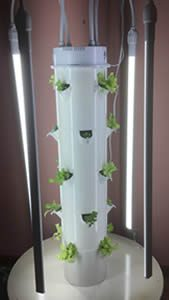 Tower Garden in the Classroom