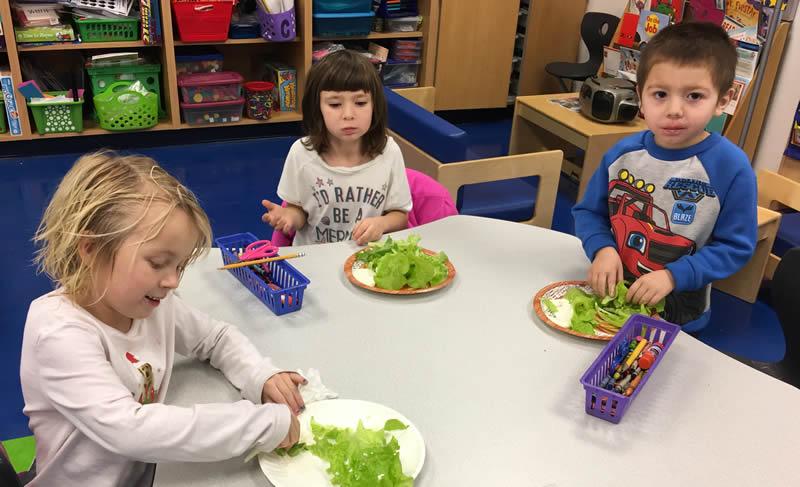 School Children Eating Lettuce from the Tower Garden